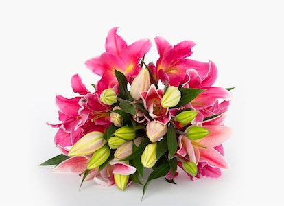 Pink Oriental Lilies - Pink Oriental Lily Bouquet - Image#2942140