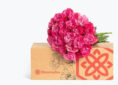 Magenta Roses: Magenta Garden Roses - Image#2983607