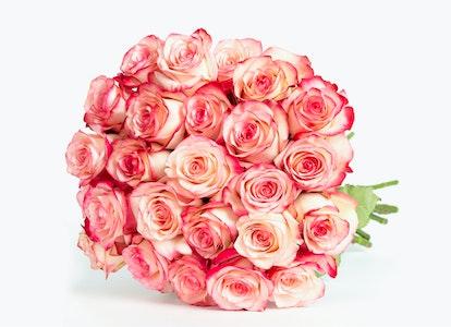 Pink Magenta & White Bi Color Rose Bouquet - Image#2984050