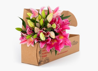 Pink Oriental Lilies - Pink Oriental Lily Bouquet - Image#3430963