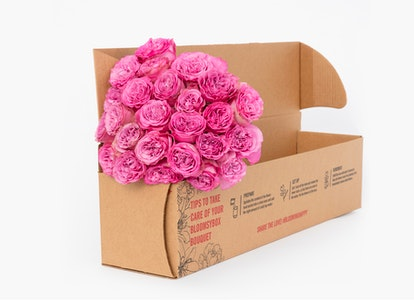 Pink Garden Rose - Pink Garden Rose Delivery | BloomsyBox - Image#4613963