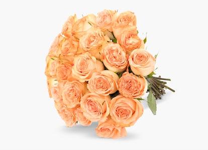 Peach Garden Rose - Peach Garden Rose Delivery | BloomsyBox - Image#4823916