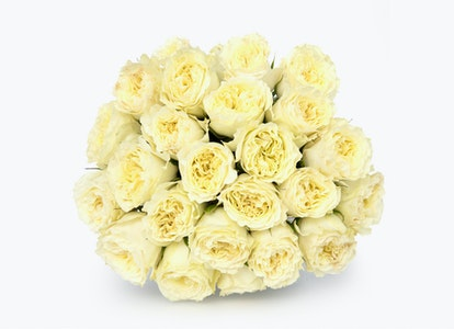 White Garden Rose - White Garden Rose Delivery | BloomsyBox - Image#4855290