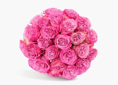 Pink Garden Rose - Pink Garden Rose Delivery | BloomsyBox - Image#4856085