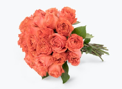 Coral Garden Rose - Coral Garden Rose Delivery   BloomsyBox - Image#4856901