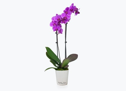 Best Mom Ever Orchid - Image#14411215