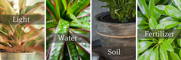 Collage of Four Different Houseplants with the following four words - one over each image: Light, Water, Soil, Fertilizer