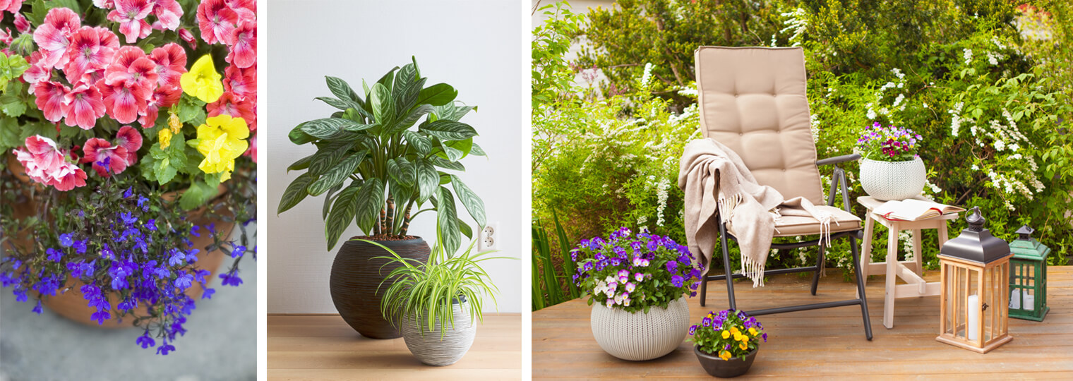 Collage: Potted coral, yellow and purple flowers, potted houseplants and potted flowers on a lush patio with chair, table and lantern