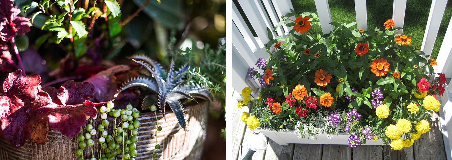 2 planted containers with beautiful succulents and summer flowers