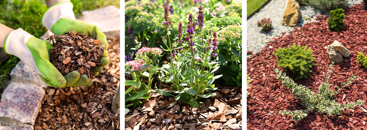 3 images: gloved hands holding mulch over landscape, mulch in landscape near lavender plant, and mulch in landscape around plants and rocks