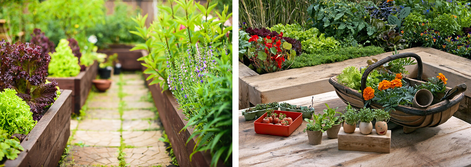 2 images: raised garden beds with a variety of plants and a walkway in between; and a raised garden bed with a variety of plants near a wood table with plants, containers and a basket on it