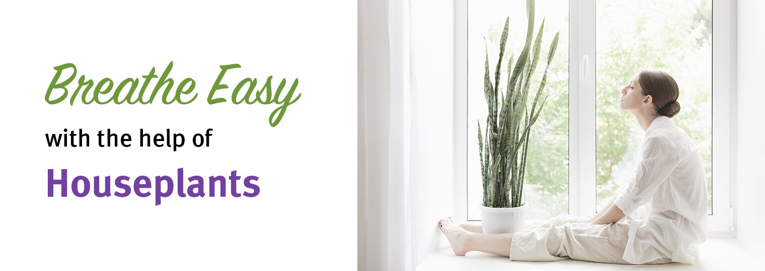 Breathe easy with the help of houseplants