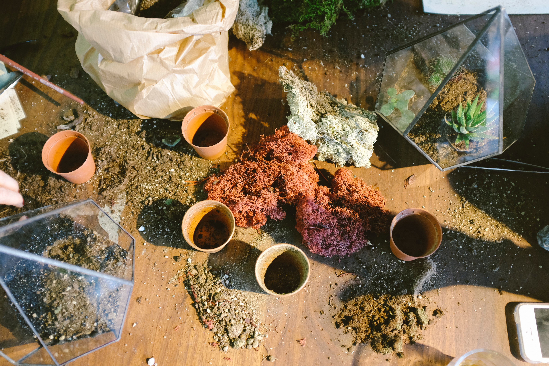 Potting plants and terrariums