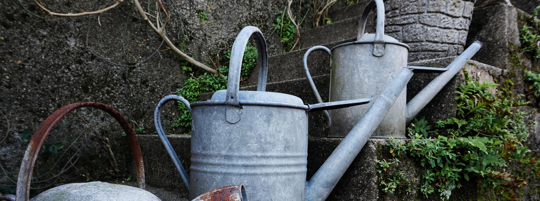 Rustic metal watering cans place on moss and ivy covered brick steps