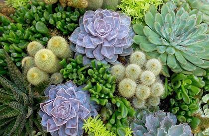 Succulent arrangement closeup