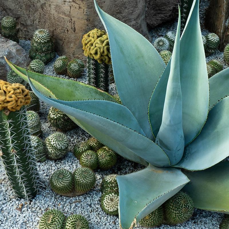 Organic cactus outdoors