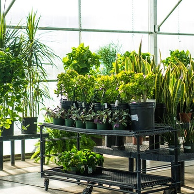 Pottend plants