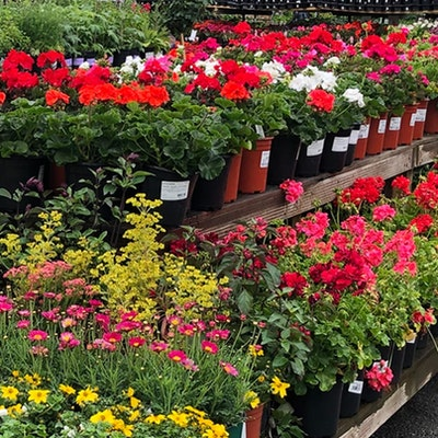 Potted flowers on shelves