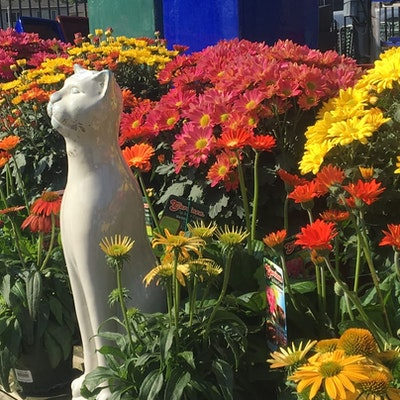 Cat statue amongst potted flowers