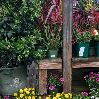 Potted plants and flowers on shelves