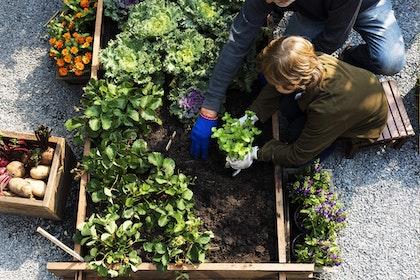 raised_bed_gardening_child_planting