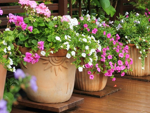 Potted plants with assorted colorful blooming plants in multiple pots in a row on a patio or deck
