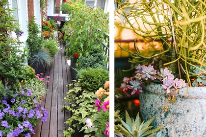 two images: 1 deck with numerous colorful potted plants and another photo of potted succulents