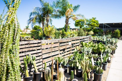 A wide variety of cactus plants in a row against a wooden fence in SummerWinds Nursery