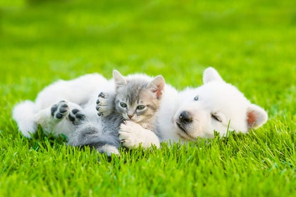 kitten and puppy laying on lawn