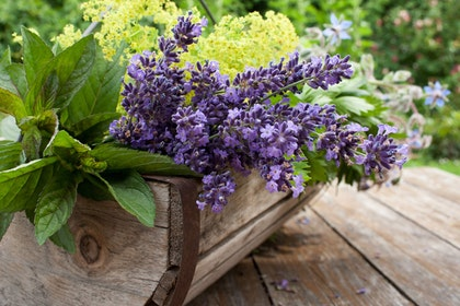 A round-bottom wooden basket on a wood table outside - filled with fresh picked herbs