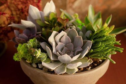 Assorted succulents in a container pot