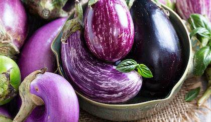 Fresh eggplant of multiple varieties with fresh herbs