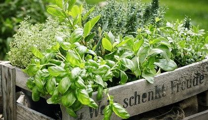Various herbs, such as basil, thyme, oregano, and rosemary in a wooden crate with Duetch on the front