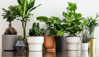 An assortment of different types of potted houseplants lined ina row on a table