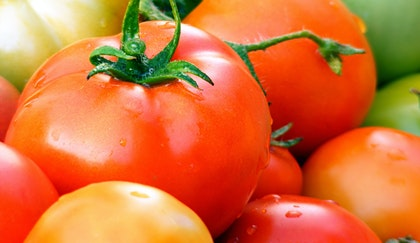 fresh tomatoes on the stem