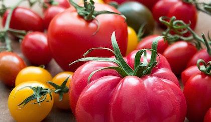 Hybrid and heirloom tomatoes