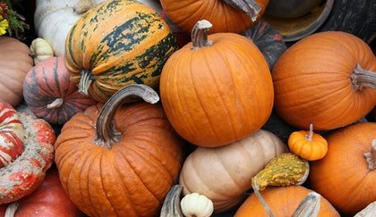 Top view of an assortment of pumpkins and gourds stacked on top of each other