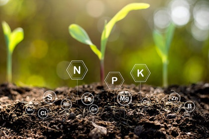 Plants starts in soil with plant nutrient symbols
