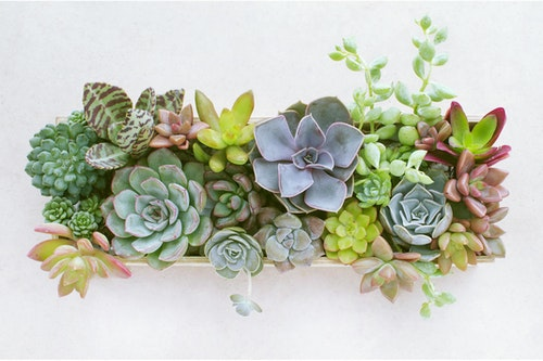 a variety of potted succulent centerpiece with a variety of succulents