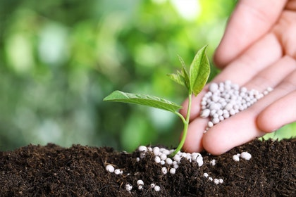 Plants start in soil outdoors with person adding fertilizers to the soil