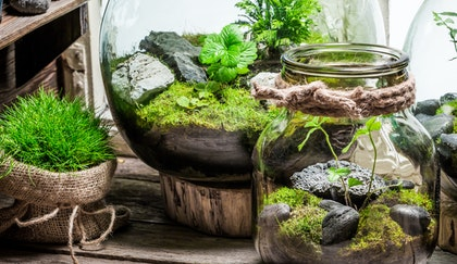 Terrariums in jars and large glass jugs on wooden table next to moss wrapped in burlap
