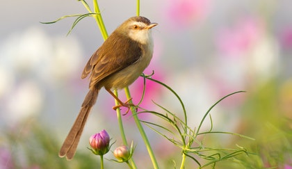 Bird sitting on flower stem