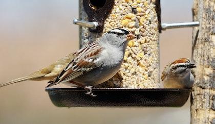 Two birds sitting on a bird feeder full of bird seed