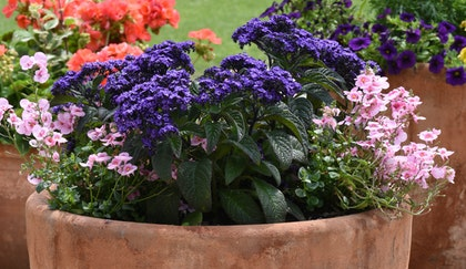 3 different container gardens with different perennials mixed in