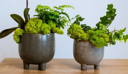 Two potted houseplants, one an ivy and one an orchid and fern, trimmed with moss