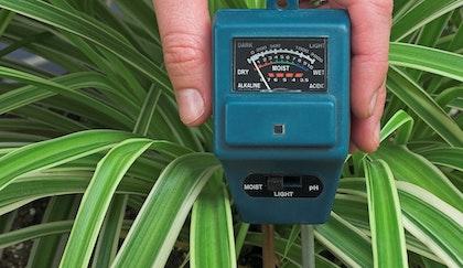 Moisture meter stuck inside of a spider houseplant