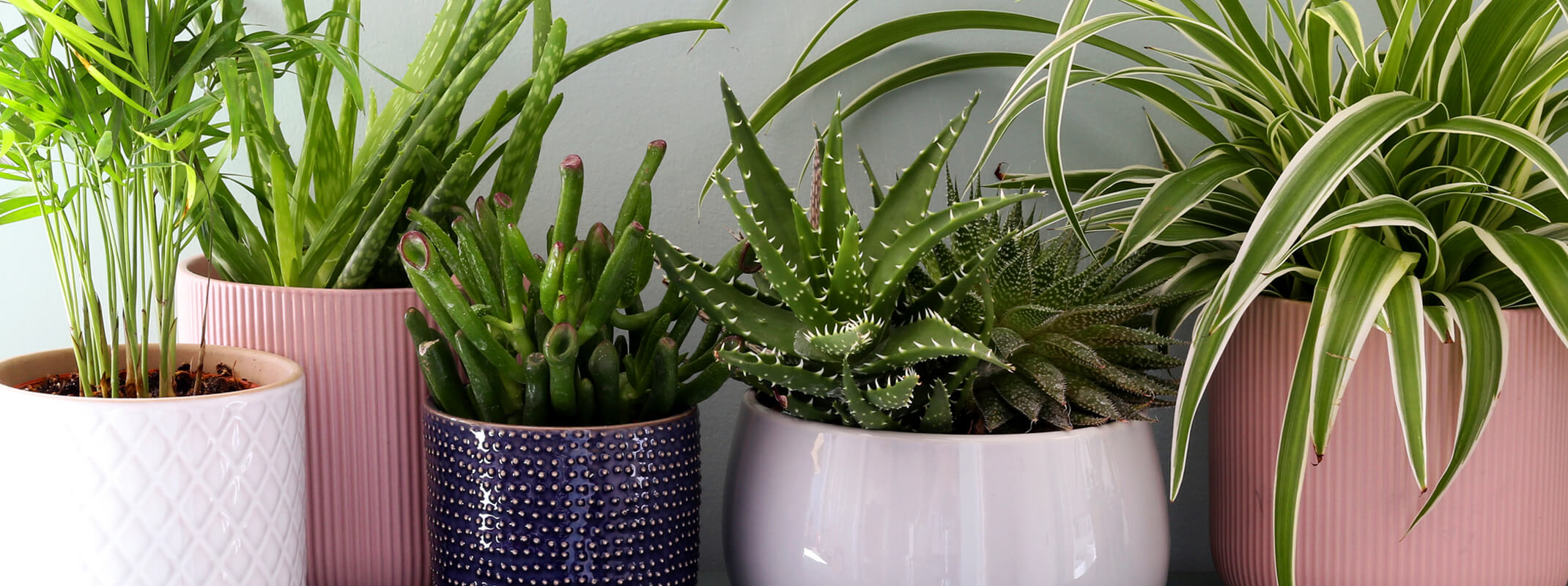 Assorted houseplants including parlor palm, aloe vera, succulent and spider plant