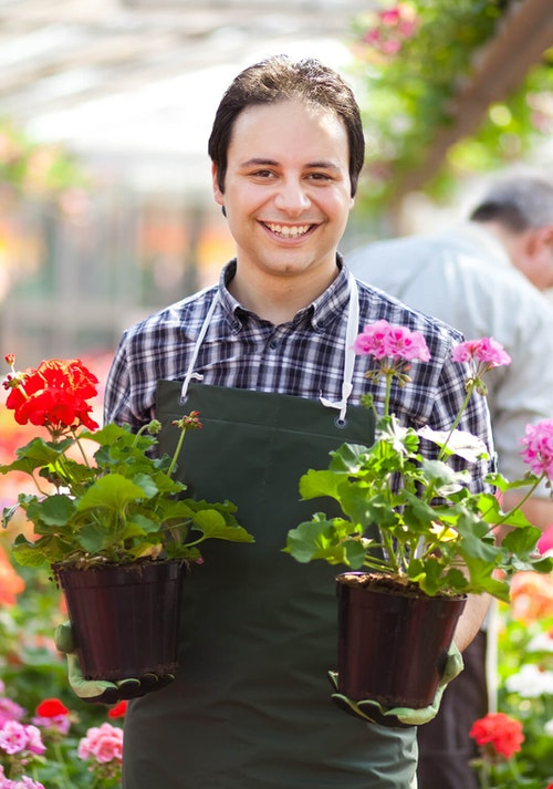 Man working in garden center smiling and holding red and pink geraniums