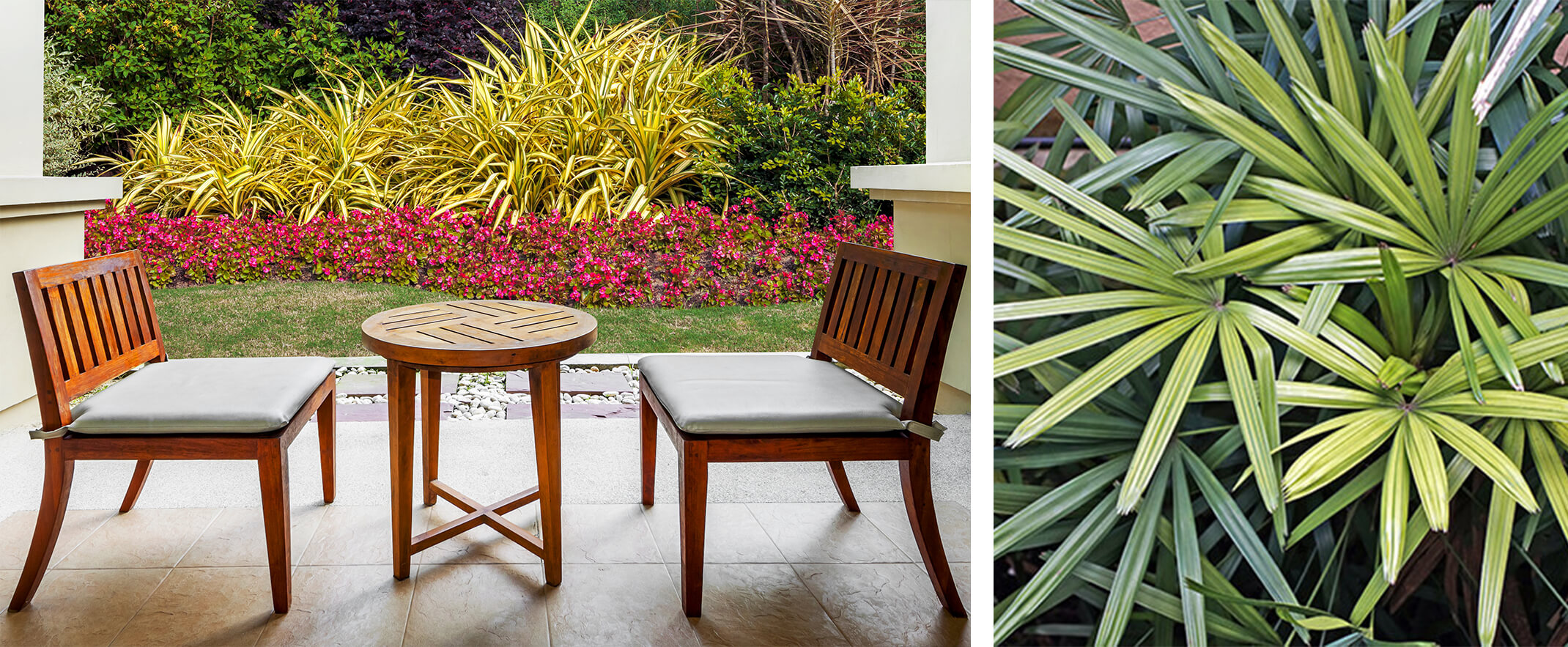 2 images: wooden patio seating and table with colorful assortment of various shade plants in background (including Dracaena), plus a closeup photo of Raphis Palm