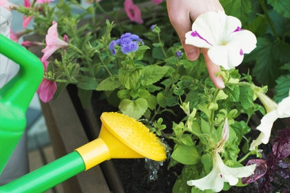 An assortment of colorful plants in a pot being watered by someone with a green and yellow watering can